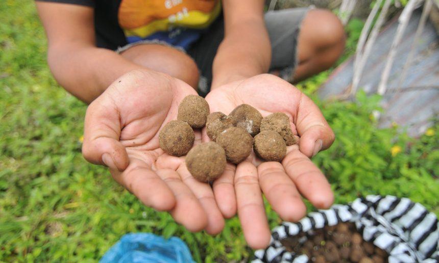 Nusa Penida Menuju Ekologis di Tengah Padatnya Pembangunan Akomodasi
