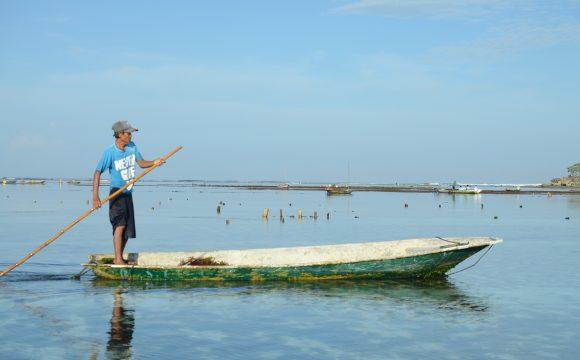 The Return of Seaweed to the Sea of Nusa Penida