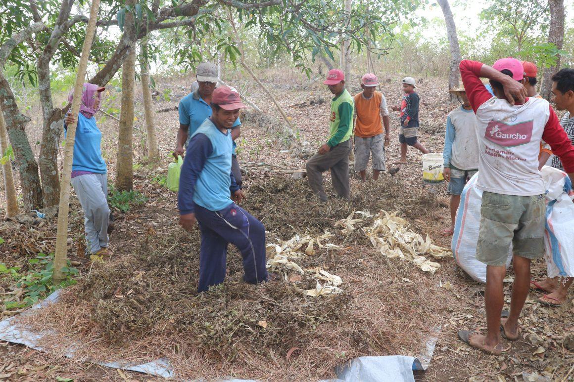 Nusa Penida Ecological