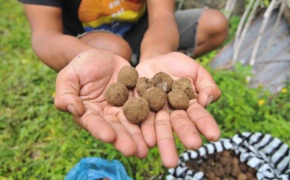 Nusa Penida Goes Through Ecological Way Among The Crowd of Accommodation Development